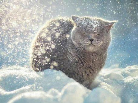 Завтра на Черкащині очікується невеликий сніг