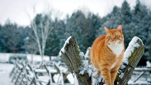 """Зима """"не здається"""": на Черкащині протримається прохолодна погода"""