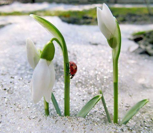 На Черкащині очікується потепління