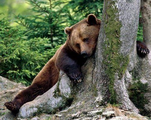 У Черкаському зоопарку прокинулися ведмеді (відео)