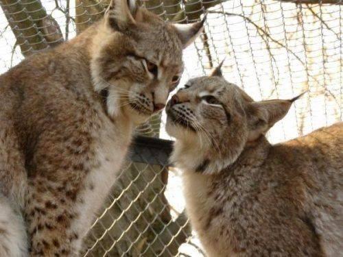 """Тварини із Черкаського зоопарку """"скаржаться"""" на здоров'я"""