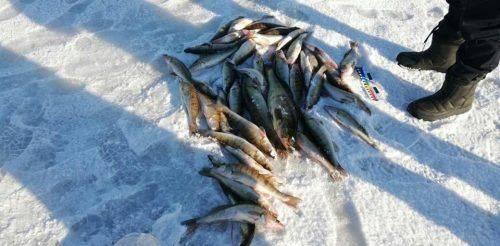 Майже 38 тисяч гривень збитків браконьєри завдали рибному господарству Черкащини