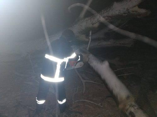 Повалені через негоду дерева заблокували рух у шести районах Черкащини