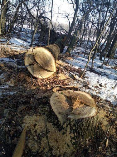 """На Черкащині """"Чорні лісоруби"""" завдали шкоди на суму більше мільйона гривень"""