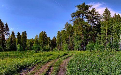Золотоніська прокуратура через суд вимагає повернути державі ліс