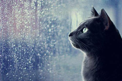На Черкащині у вихідні очікується дощ