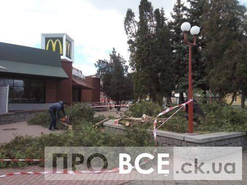 У Черкасах біля МакДональдзу зрізали небезпечне дерево (фото)