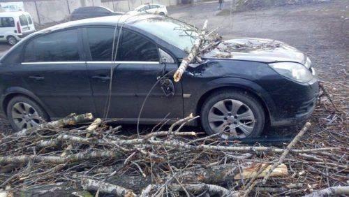 Перекинуті зупинки, повалені дерева та знеструмлені райони: наслідки черкаського буревію (фото)