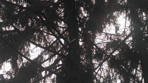 На Черкащині рятувальники діставали з дерева кота (фото)