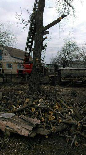 На Черкащині з дерева знімали пораненого чоловіка (фото)