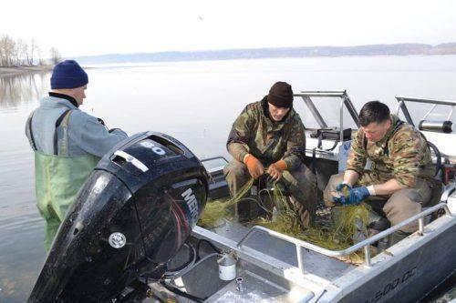 Браконьєри на Черкащині наловили сітками риби майже на 40 тисяч гривень (фото)