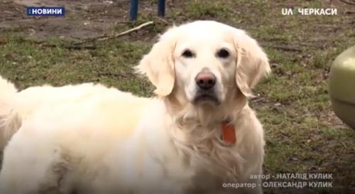 Черкасці хочуть облаштувати баки для прибирання за собаками (відео)