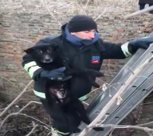 На Черкащині рятували собаку, який дві доби пробув у ямі (відео)
