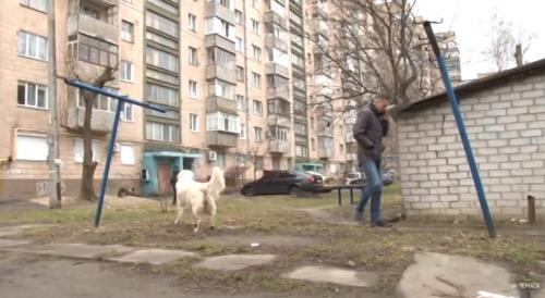 У парку Хіміків та Сосновому бору збудують майданчики для вигулу собак (відео)