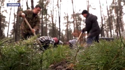 На Черкащині висадили вже три гектари лісу (відео)