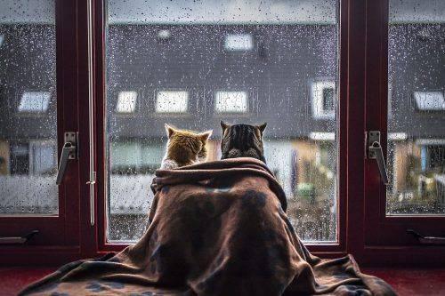До кінця тижня на Черкащині буде холодно