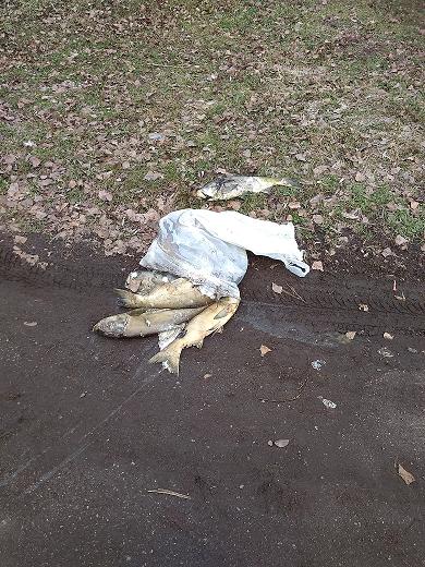 На Черкащині у річці загинуло майже 350 кг риби