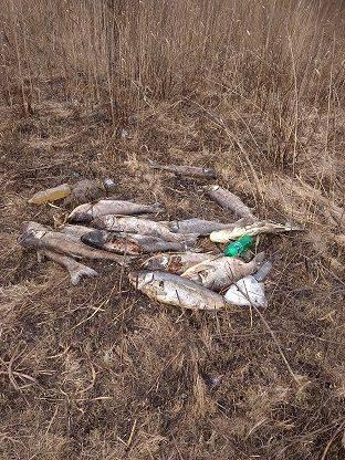 На Черкащині у річці загинуло майже 700 кг риби