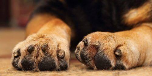 На Черкащині отруїли близько двох десятків собак