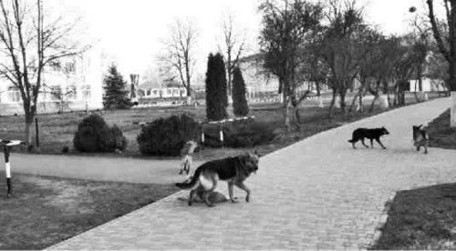 На Черкащині біля школи зграя собак лякає дітей