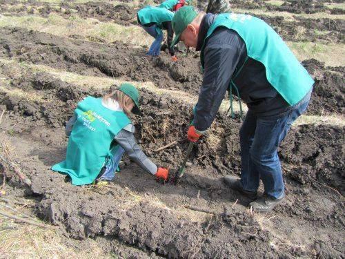 Плантація новорічних ялинок з'явилася на Черкащині (фото)