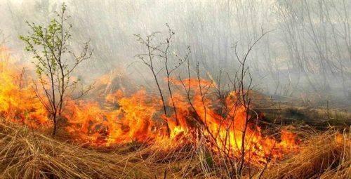 На Черкащині оголосили надзвичайну пожежну небезпеку