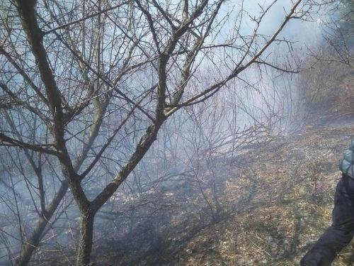 Імовірно підпал: у Липівському орнітологічному заказнику пожежа (фото, відео)