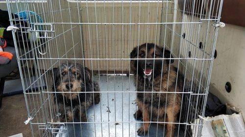 У Золотоноші відловлюють безпритульних собак