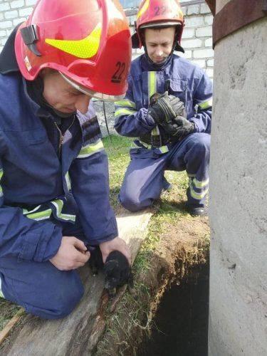 На Черкащині рятували маленьких цуценят, які впали до ями (фото)