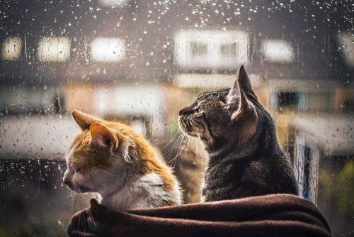 З неділі на Черкащині почнуться дощі