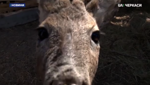 """У """"Зерноленді"""" на Черкащині хочуть створити свій зоопарк (відео)"""