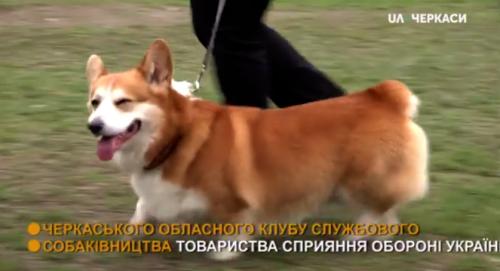Із виступами та конкурсами: черкаський клуб собаківництва відзначив 50 років (відео)