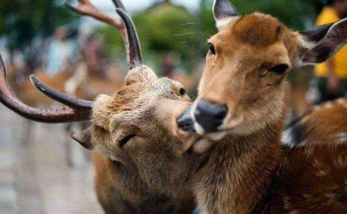 """На Черкащині розпочався """"сезон тиші"""" для розмноження диких тварин"""