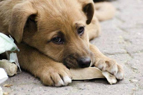 Унікальна фотовиставка до Міжнародного дня безпритульних тварин відкриється у Черкасах