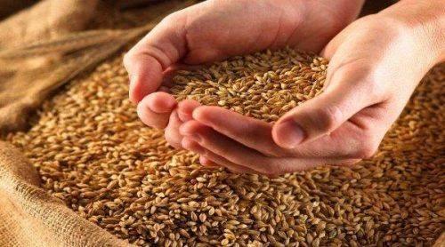 Черкащина посіла перше місце серед областей України за урожайністю