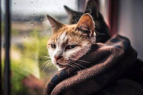 Після свят на Черкащині очікують дощі