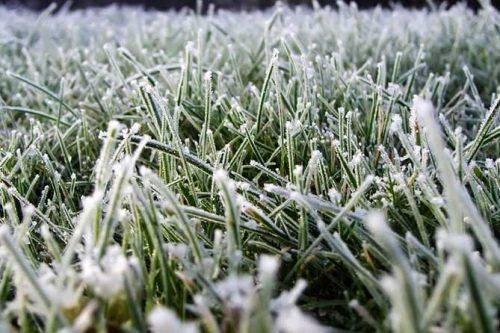 Через заморозки на Черкащині оголосили жовтий рівень небезпечності