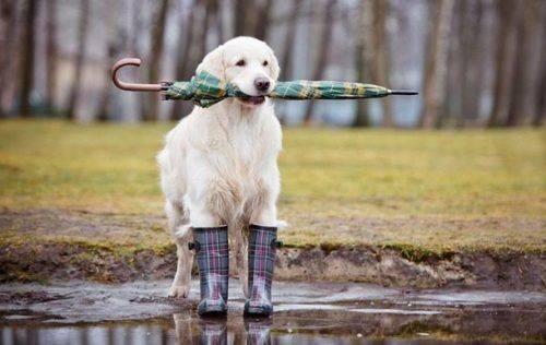Дощі, грози та місцями град: яка погода буде на Черкащині до кінця місяця
