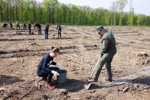 На Черкащині висадили майже 130 гектарів лісових культур (фото)
