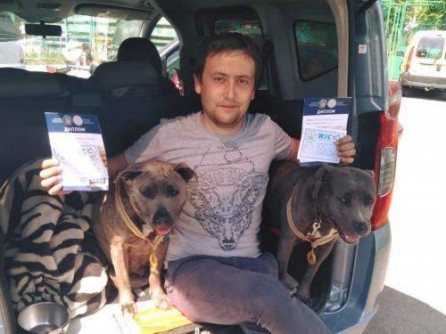 Кривавий інцидент із тваринами в центрі міста: хто власник бійцівських собак?
