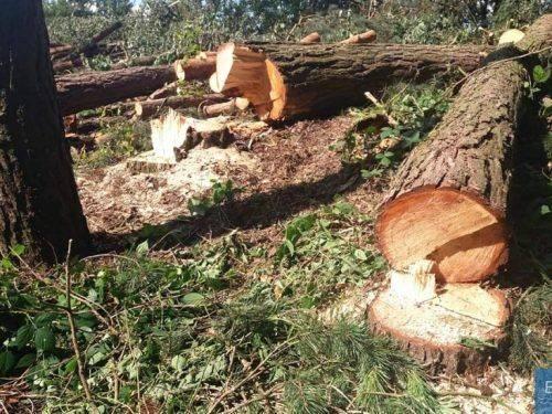 """На Черкащині """"лісові"""" браконьєри завдали збитків на понад мільйон гривень (фото)"""