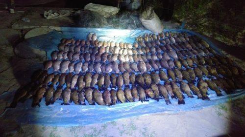 П'ять мішків риби уночі наловили браконьєри під Черкасами (фото, відео)