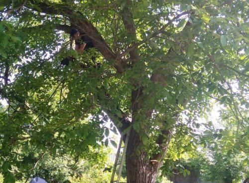 На Черкащині рятували кота, який другу добу сидів на дереві (фото)