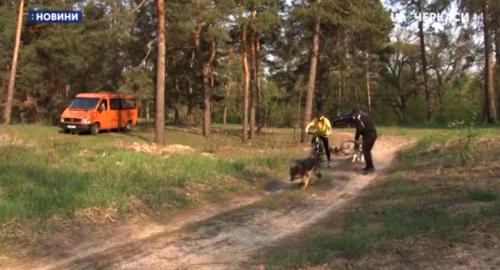 Черкаські собаки-спортсмени взяли участь у перегонах (відео)