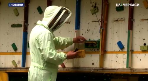 На Черкащині зареєстрували цього року понад 300 пасік (відео)