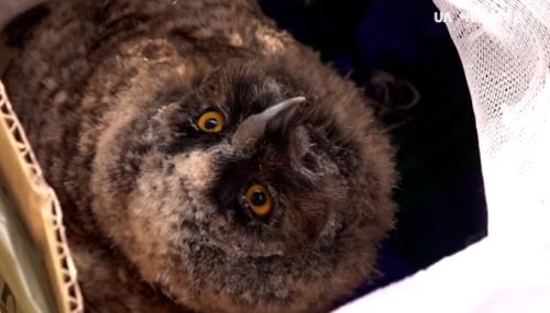 Працівники черкаського університету передали до зоопарку маленьке совеня (відео)