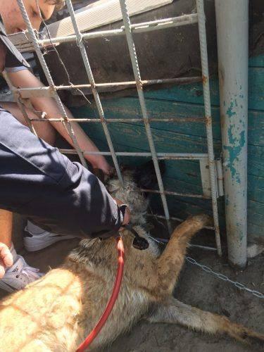 За добу рятувальники двічі визволяли собак у Черкасах та області (фото)