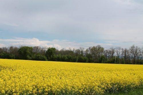 На Черкащині провели «Весняну майстерню під Козацьким шпилем» (фото)