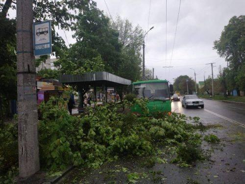 У Черкасах на автобус впало дерево (фото)