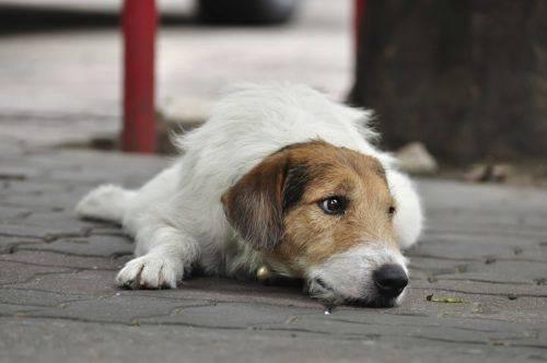 За місяць на Черкащині стерилізували та вакцинували майже 300 бездомних собак
